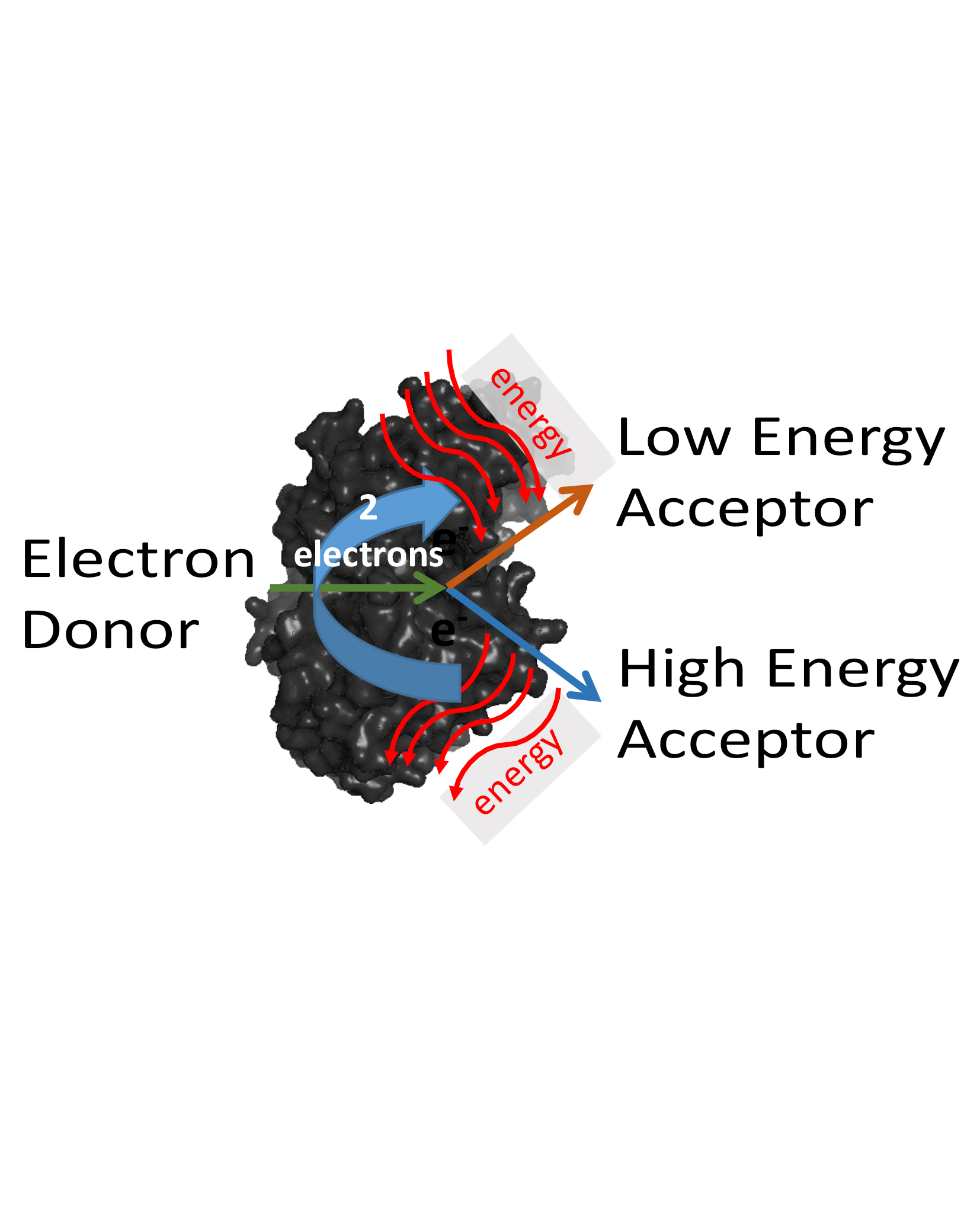 Microbes Making the Most of Their Energy Sources | Energy Frontier